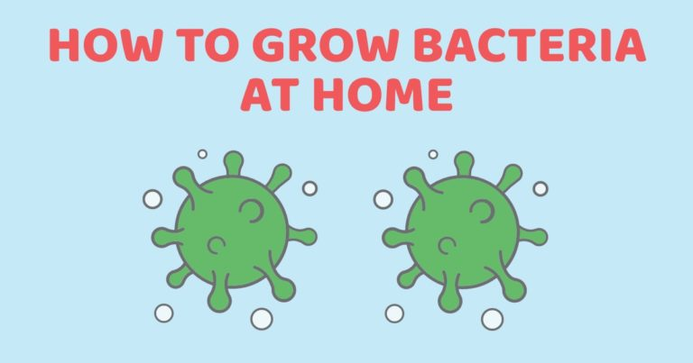 How To Grow Bacteria At Home So That Kids Know The Importance Of Handwashing